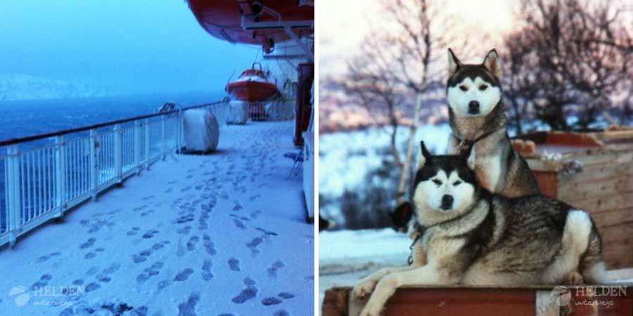 Hurtigruten und Huskies