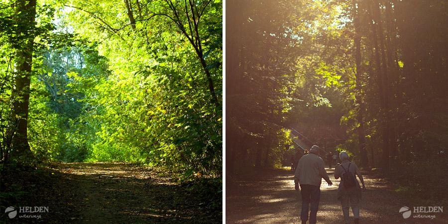 Waldgebiet am Decksteiner Weiher in Köln-Sülz
