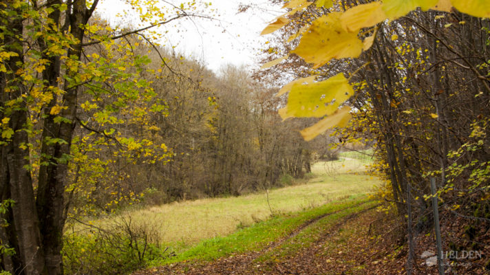 Herbst in der Eifel 2014