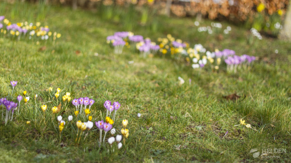 Frlühlingspflanzen im Park von Schloss Vaeshartelt