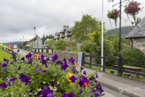 Caledonian Canal Flowers