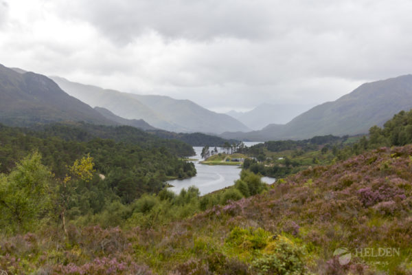 Glen Affric View